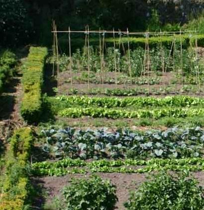 Formation cr ation d un jardin potager un endroit o il for Creation jardin potager